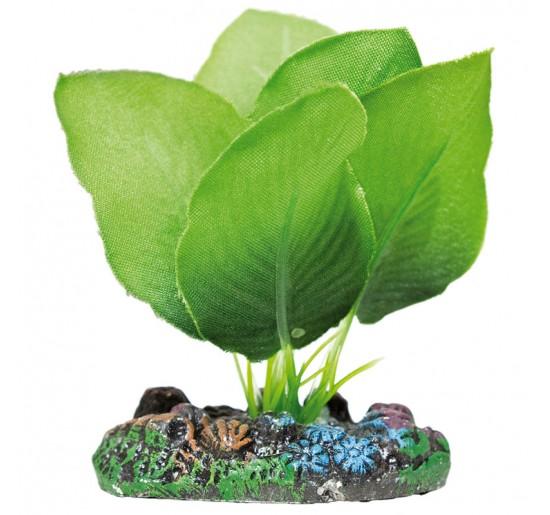 Anubia Verde 7.5cm