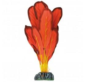 Echinodorus Roja 30cm