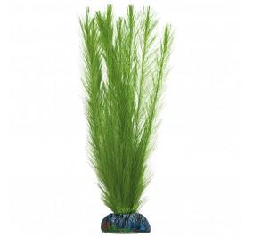 Miriophyllum 7cm