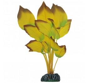 Anubia Amarilla 30cm