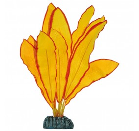 Echinodorus Amarilla 40cm