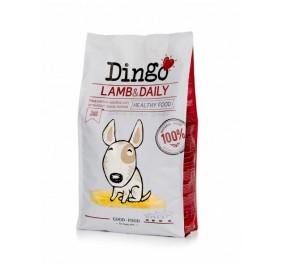 Dingo Adulto