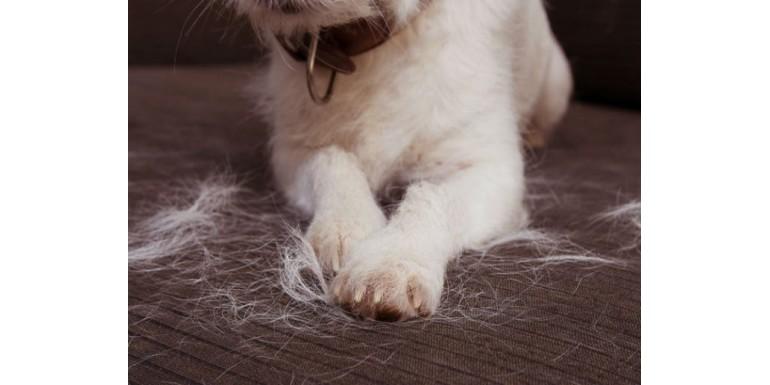 Controlar la caída del pelo