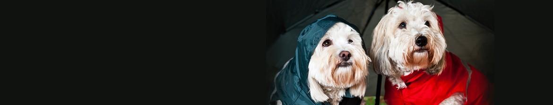 Educación y adiestramiento cachorros