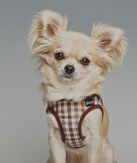 Gloria - Arneses para perros